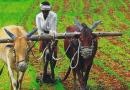 अच्छी बारिश से कृषि आधारित अर्थव्यवस्था होगी मजबूत