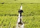 बेमौसम बारिश में बह गई खेतिहरों की मेहनत